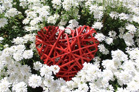 Red heart in sweet alison Stock fotó