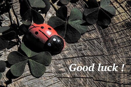 Good luck wishes with clover and a ladybird