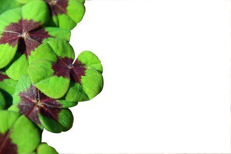 A border with lucky clover