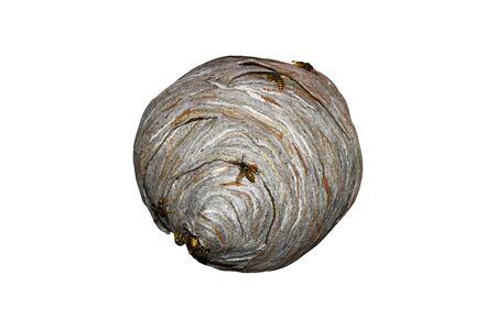 big wasp nest
