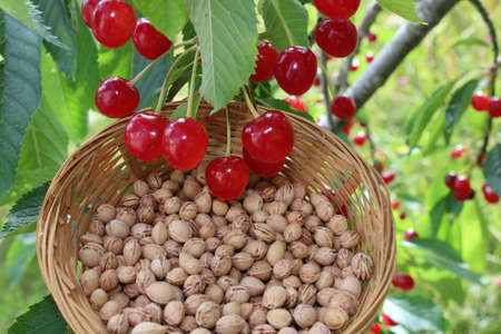 many cherry stones and cherries Banco de Imagens