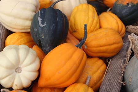 acorn pumpkin on a market
