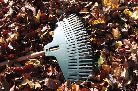 rake leaves in the garden Banco de Imagens