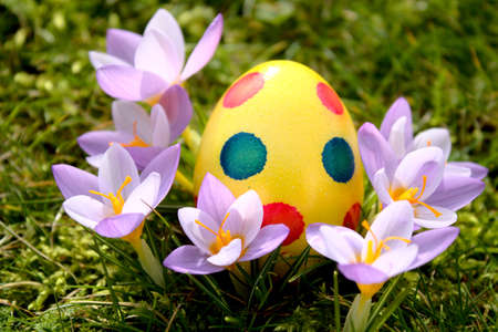wonderful easter decoration with easter eggs and crocus Archivio Fotografico