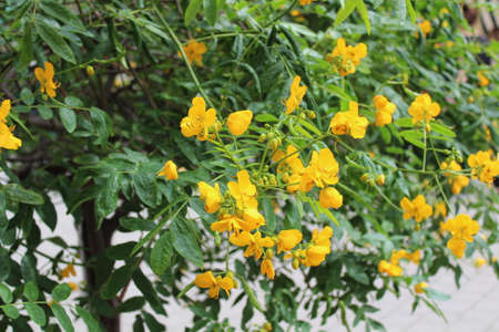 a plant with yellow blossoms