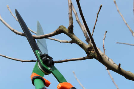 scissors and water arms on a tree Archivio Fotografico