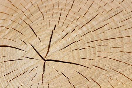 wooden structure of a tree trunk Archivio Fotografico