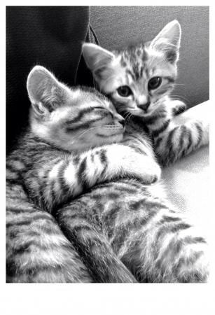 otganimalpets01: Kitten hug