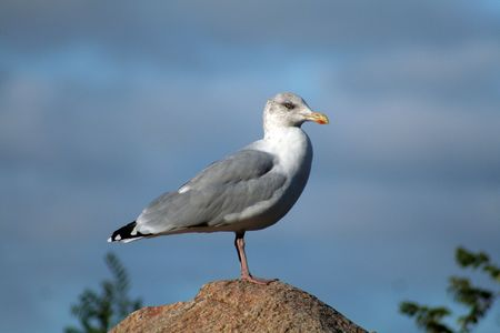 A seagull sitting alone on a rock