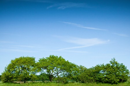 A row of green trees and bushes against a blue sky Stock Photo - 7125383
