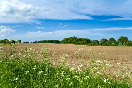 A newly seeded field in the early summer Stock Photo