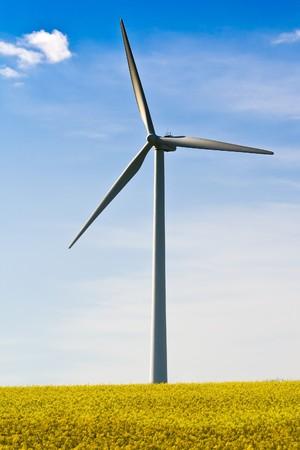 A modern windmill in a yellow rape field