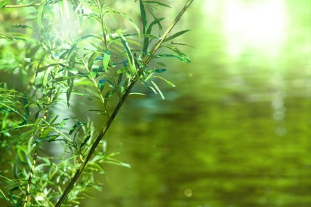 Green leaves with reflective background and room for your text