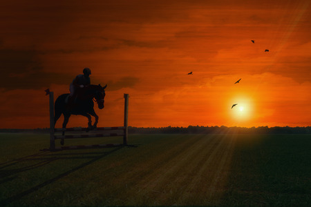 obstacle course: horse at sundown