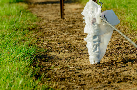 plastic bag caught on a farmers fence photo