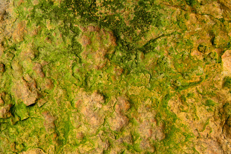 stone with algae photo