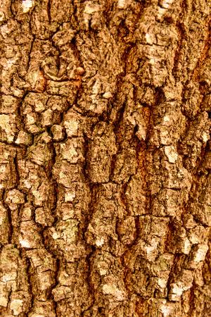 bark mulch: tree bark