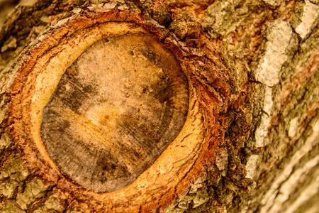 bark mulch: tree bark with knot