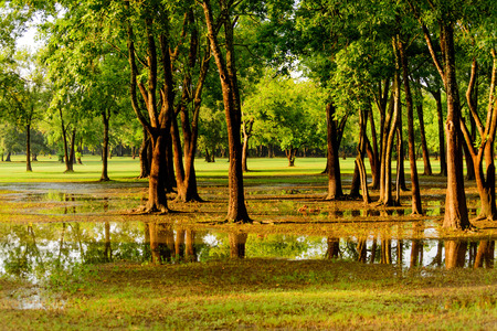 flooded park in Houston with standing water
