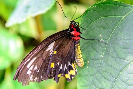 빨간색과 노란색 바디 너덜 나비 스톡 콘텐츠