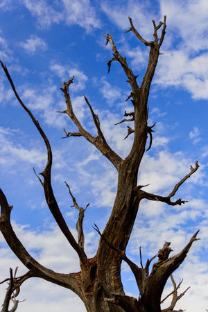 twisting: twisting tree branches against blue sky