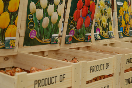 assorted crates of tulip bulbs