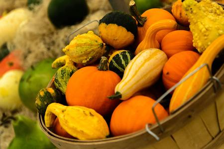 Halloween kalebassen van verschillende kleuren en maten Stockfoto