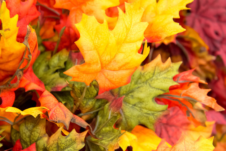 colorful fall decorations - pumpkins, leaves