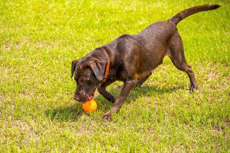 dogs playing: Perros que juegan en un inundado, hierba mojada dogpark