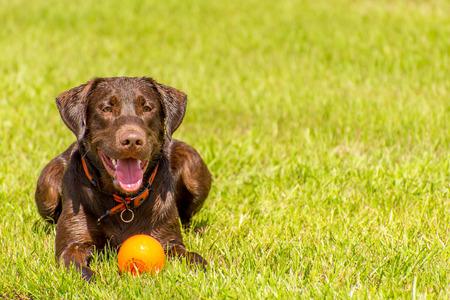 Perros que juegan en un inundado, hierba mojada dogpark