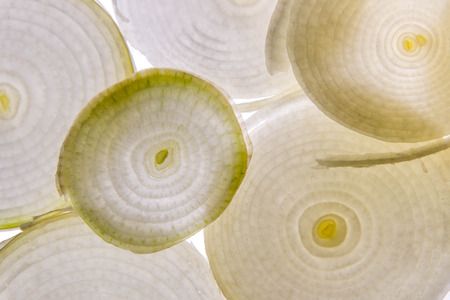 white onion slice with backlighting Reklamní fotografie