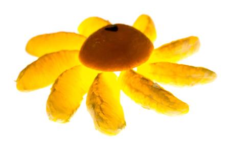 orange slices with backlighting