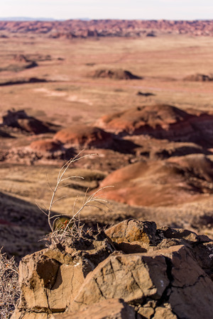 petrified: Petrified Forest, AZ, USA Stock Photo