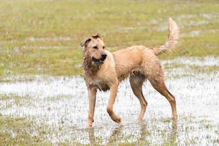 perros jugando: perros que juegan en un dogpark inundado