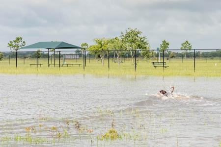 Hund Schwimmen im stehenden Flutwasser in Bereichen und Wanderwege Standard-Bild - 40508375