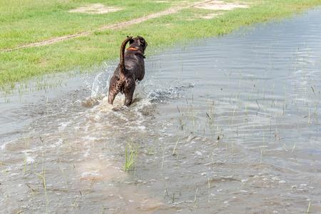 Hund spielen im Stehen Hochwasser in Bereichen und Wanderwege Standard-Bild - 40508472