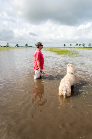 fetch: May 30, 2015 - Beverly Kaufman Dog Park, Katy, TX: man with dogs playing swim fetch in standing flood waters covering fields and trails Stock Photo
