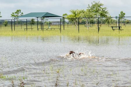 Hund Schwimmen im stehenden Flutwasser in Bereichen und Wanderwege Standard-Bild - 40508732