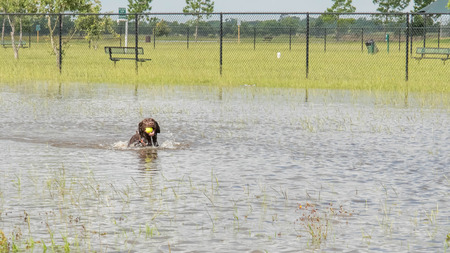 Hund Schwimmen im stehenden Flutwasser in Bereichen und Wanderwege Standard-Bild - 40508734