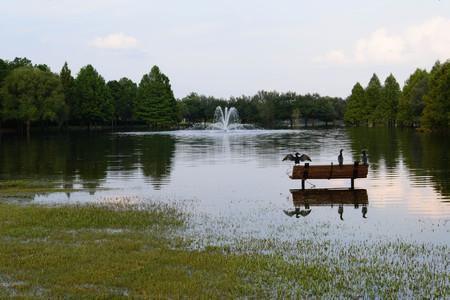 Post hurricane Harvey flooding in Houston, September 3, 2017