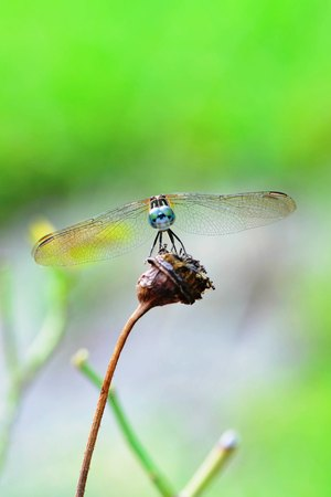 macro close-up of a dragonfly balancing on a green branch