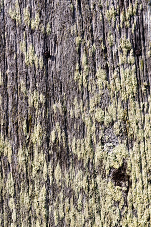 Grey and knotted aged outdoor weathered barn wood Banco de Imagens