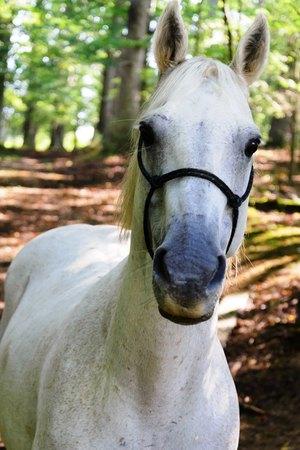 white quarter horse standing on green grass