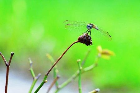 Primer plano macro de una libélula equilibrando en una rama verde