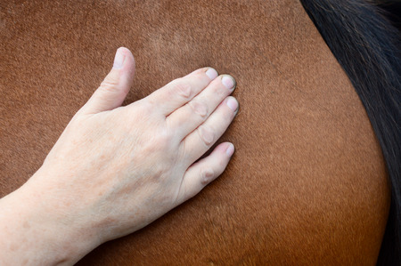 Horse shiatsu massage Stock Photo