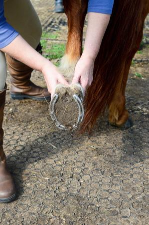 Horse shiatsu massage to back leg and hoof
