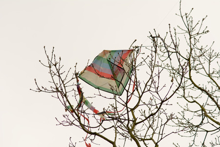 trapped: Kite trapped in branches of tree