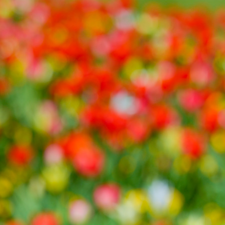 Tulip flowers abstract background photo