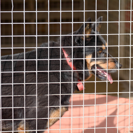 kennel: dog in kennel in dog rescue centre