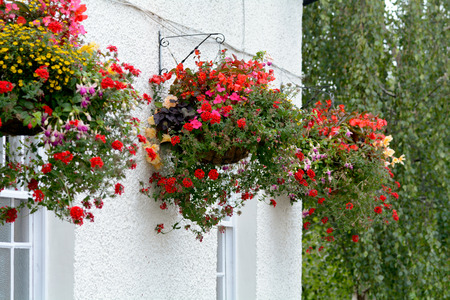 flower baskets: Hanging flower baskets